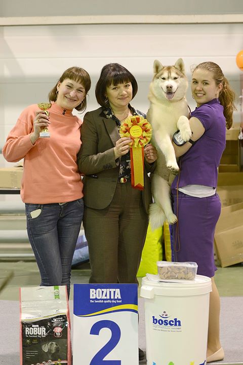 с Maria Lubivaja Husquisher Siberians, Cheryl Lecourt and Hunter Cong_dog shows, judges I. Rodina, O
