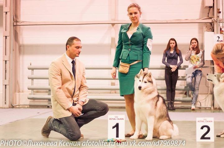 2015 Judge Augustin Ionescu  Tunghat's Rio De Janeiro - Best Male from Cham