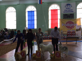 Победы Хасквишер в Мурманске