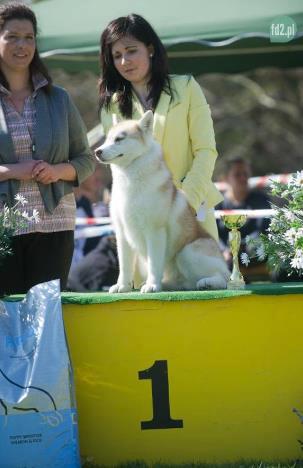 BIS Puppy on dog show Dobro Mesto (Poland) 1 May 2013_thank you judge Blanka Borowiec-Szczepanska