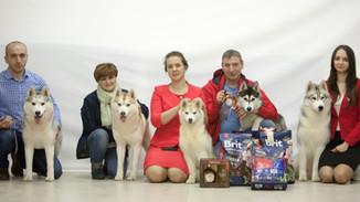 Выставка Чемпион Клуба СЕС 2019