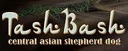 питомник среднеазиатских овчарок Ташбаш