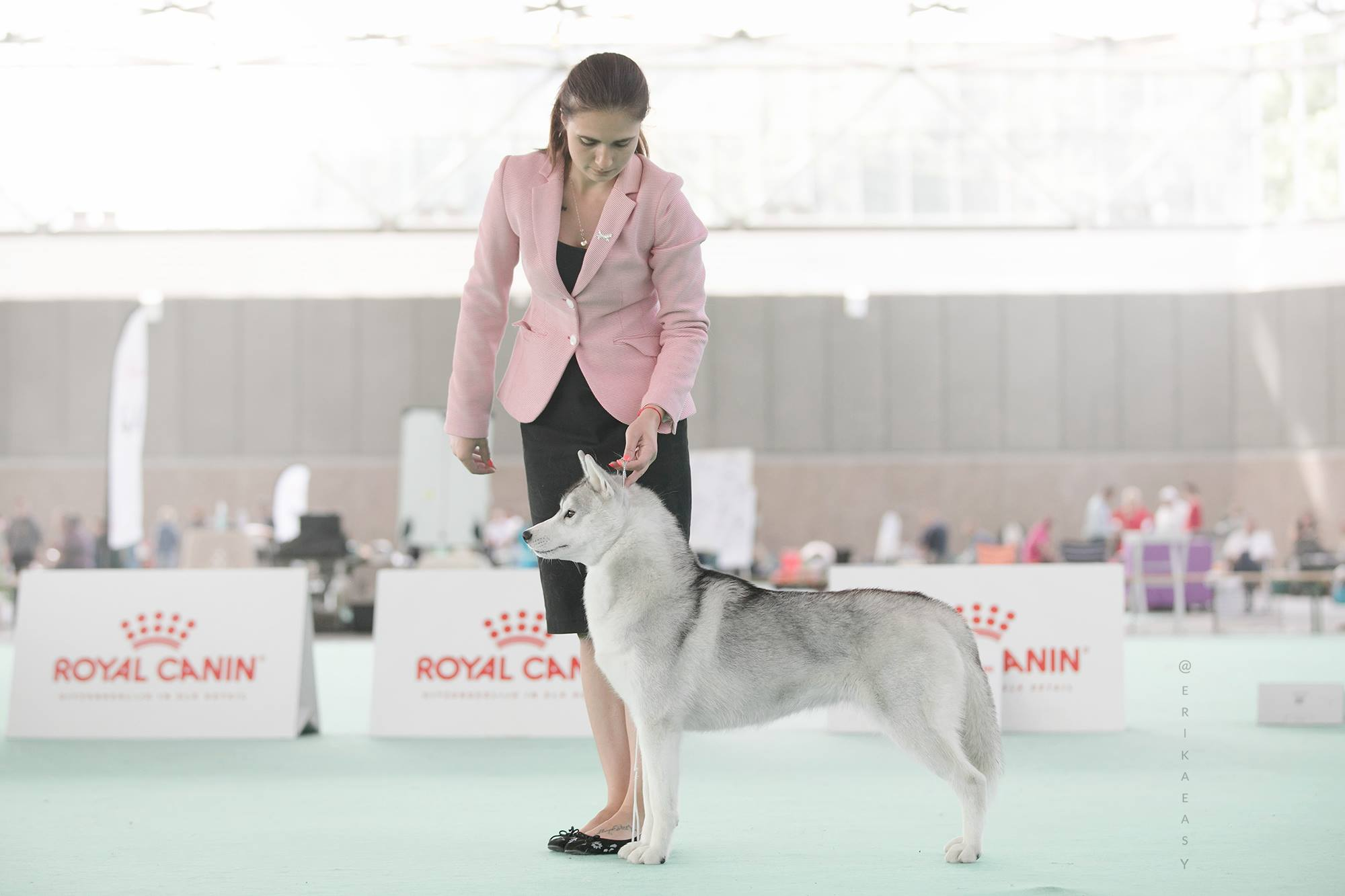 junior female husky WDS2018