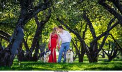 свадебная фотосессия с хаски