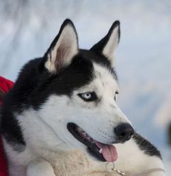 dogs_photo_karon_3