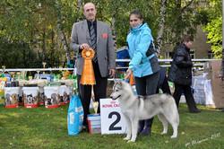 Reserved BEST IN SHOW PUPPY !!! judge Miodrag Vretenicic (Montenegro) handler Виноградова Вероника
