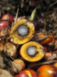 このページは熱帯花木、トロピカルフラワー苗木、種の販売。主にイランイランの木、紅の木(ベニノキ)、ヤシの木、バナナパッションフルーツ、カシューナッツ、国産無農薬カレーリーフ(生葉)カレーの木、ヘリコニア、マカダミアナッツ(ボーモント)などなど多数にわたって栽培をしています。 他にも珍しい熱帯の植物の苗木、種を販売しています。ジャボチカバ・コウモリラン・ビカクシダ・コナコーヒーの木など