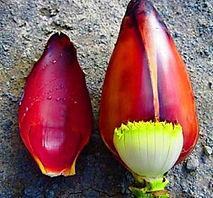 Musa Sakaianaバナナ  ※なかなか流通していない珍しい品種です。