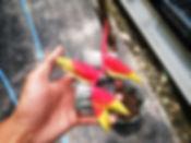 限定販売・花付きヘリコニア・ロストラータ(七分咲き) 写真現品  鉢植えで花付きの珍しいヘリコニアロストラータ。根は張っているので子株が出てくると思います。  葉っぱはありません。鉢植えで根があるので花持ちが良い。だいたい1ヶ月はもちます。  1鉢 3500円  売り切れ 完売