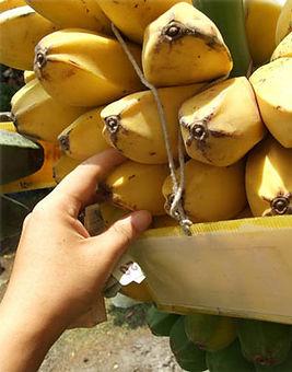 ・Kluai Him Sabaバナナ  (Musa Kluai Him Saba)  タイ原産のローカルなバナナ  人気度:★