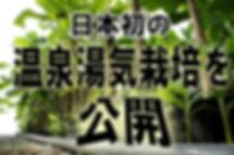 日本初の温泉の湯気を利用しての奥飛騨バナナ苗・バナナ種の販売専門店。野生の耐寒性バナナを種から栽培しています。奥飛騨温泉郷には、温泉の力を利用しすくすくと育つバナナがある。温泉地の新たな可能性をみせてくれる、温泉ハウスのエコ栽培をご紹介。奥飛騨・栃尾温泉にある「奥飛騨ファーム」では、豊富に沸く温泉の力を利用し、日本初となる温泉湯気を使ったバナナの栽培に取り組んでいる。作られているバナナは主に観賞用バナナとして販売。これが日本ではここでしか栽培されていない温泉熱利用の栽培方法