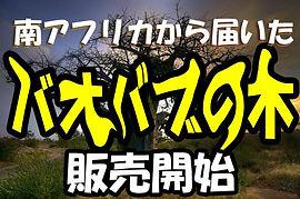 バオバブの木の販売