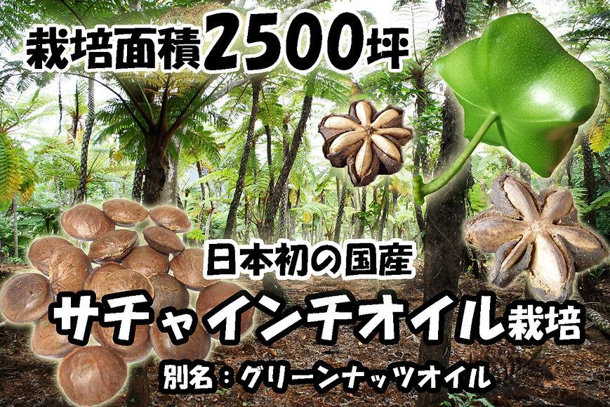 国内では輸入品しか出回らないサチャインチ(アマゾングリーンナッツ)。奥飛騨ファームでは沖縄県石垣島でサチャインチ(グリーンナッツ)オイル栽培に着手しています。国産の安心・安全のサチャインチオイルの生産。国内では栽培事例はなく日本初のオイル栽培です。サチャインチ(アマゾングリーンナッツ)オイルはオメガ3の含有量の高さから注目を集めています。栄養高いサチャインチから造るサチャインチオイルは、α-リノレン酸(48%)およびビタミンE(200mg/100g)が多く含まれており、健康食品として注目し始めています。別名「インカのピーナツ」や「インカ・インチ」