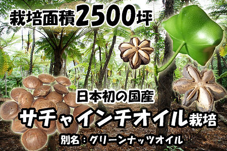 2013年から奥飛騨ファームでは沖縄県石垣島で国内初となるサチャインチ(グリーンナッツ) オイル栽培に着手。栽培面積2500坪。 荒れ果てた農地を開拓し、新しい作物の農地へと生まれ変る。 そして石垣島の新しい農産物として流通させる。 サチャインチオイルは特殊な栄養価値が高いのにもかかわらず 輸入品しか国内では流通していない。 安心・安全な国産高級オイルの生産を目指します。
