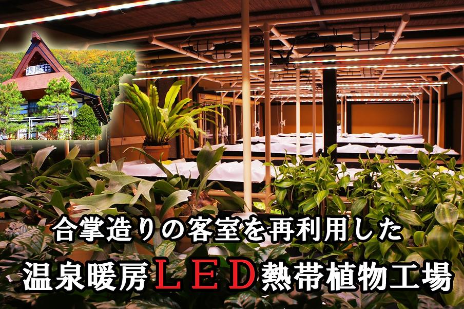 日本では前例がない 2015.3月に温泉暖房によるLED熱帯植物工場完成