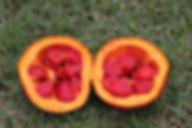 ガックフルーツ(ナンバンカラスウリ・南蛮烏瓜)  Momordica cochinchinensis  中国、ベトナムなどに生えるツル性の多年草植物。別名ナンバンキカラスウリ、モクベツシ(木鼈子)、ガックフルーツとも呼ばれる。雌雄異株なので、両株の花が同時に咲かないと結実しません。なかなか流通しない果実なのでレアです。(株)奥飛騨ファームでは2012年から商業的大規模栽培に着手しています。  ※種子の売買は薬事法で禁止されていますの注意してください。  βカロティン(ニンジンの10倍)・ リコピン(トマトの約70倍) 天然ビタミンE(アルファトコフェロール) ビタミンA  ビタミンC(オレンジの60倍)  ゼアキサンチン(トウモロコシの40倍)