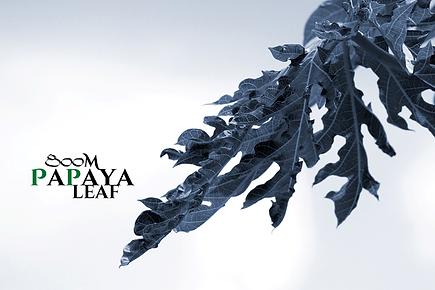 標高800m・飛騨の高地栽培で育てられた最高級のパパイヤ葉茶   高地ならではの日光・寒暖の差が最高の素材を作り上げる   ワンランク上のパパイヤ葉茶   800M PaPaya Leaf