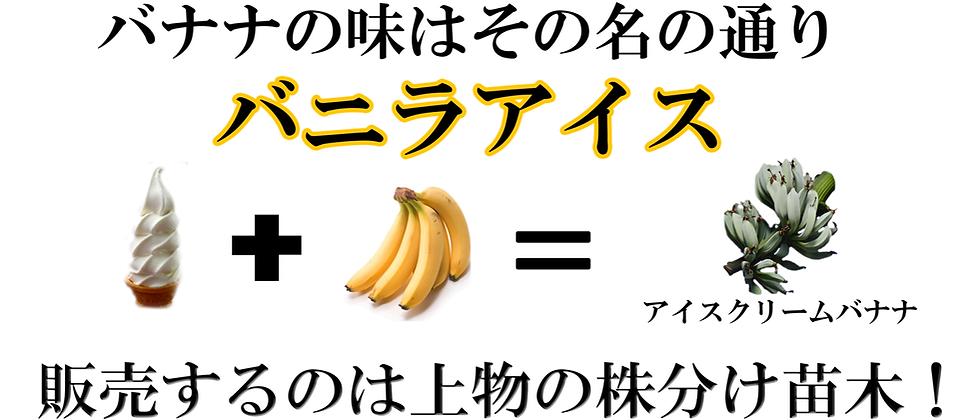 寒さや害虫にも強い食用のアイスクリームバナナ苗販売 耐寒性も優れていて冬越し可能な品種。 日本や海外でも耐寒性があり美味しいと有名で人気の品種。 アイスクリームバナナは耐寒性食用バナナの中ではトップクラスに入る。 関西、関東方面でしたら冬場は幹に保温対策をしていただくと 地植え可能な品種。 大型の品種ですので2~3mほど大きく成長します。(鉢植え栽培も可能) ※この価格でこれだけの上物な苗木は他では手に入りません