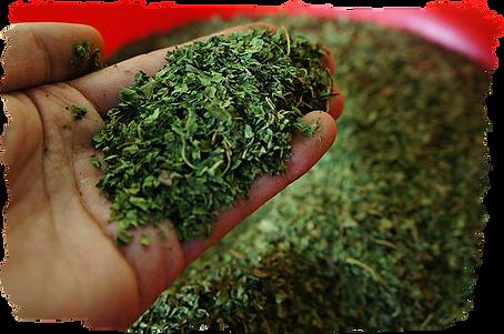 国産無農薬に拘る Organically grown    800mパパイヤ葉茶には一切農薬は利用していません  誰が飲んでも安心できる国産パパイヤ葉茶です  安心安全は当たり前