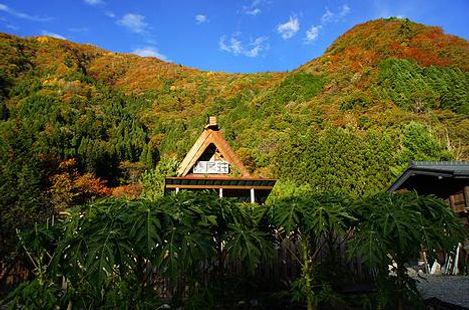 高地栽培に拘る・ずば抜けた栄養  Cold and highland agriculture   標高800mにある奥飛騨温泉郷の畑では夏でも 一日の寒暖の差が激しく、美味しい野菜が育つ だけど畑での南国フルーツ栽培は適していない環境だと 誰もが言う。我々には常識などない 常識を捨て最高な品質のパパイヤ葉茶(パパイヤリーフ)を 生産することに拘る 生産されるパパイヤ葉茶は全て畑で栽培されています.