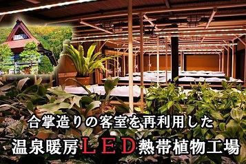 2015.3月に温泉暖房によるLED熱帯植物工場が完成しました。詳細は専用ページを拝見くださいませ。