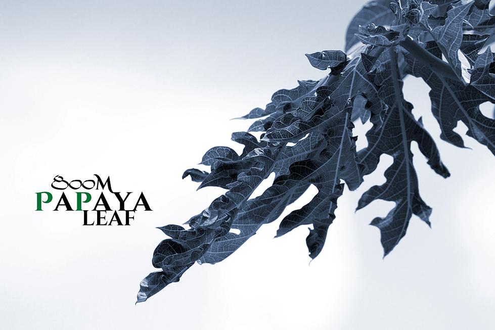 標高800m・飛騨の高地栽培で育てられた最高級のパパイヤ葉茶     高地ならではの日光・寒暖の差が最高の素材を作り上げる     ワンランク上のパパイヤ葉茶     抗がん効果が認められている唯一のお茶です