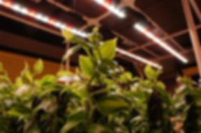 利用しているLED電球は特殊な植物専用使用。 一般的なLED電球とは異なり植物の生育に欠かせない光合成を作りだす 太陽の光に近い特殊なLED装置。 これにより年中安定して熱帯植物の生産が可能になる。 特殊なため値段は高額です。