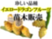 日本初の温泉の湯気を利用しての奥飛騨ヤシの木苗・ヤシの種の販売専門店。このページはイエロードラゴンフルーツ苗木販売。別名イエローピタヤとも言われています。ドラゴンフルーツの中では一番甘みがあるおしいイエロードラゴンフルーツ。希少価値が高く流通していないのでレアな品種になります。イエロードラゴンフルーツの苗木を販売しています!温泉の蒸気を利用することにより熱帯雨林の気候になり雪国でも奥飛騨バナナ苗などを栽培を可能にしました。国内初のバナナ苗木や種を専門に取り扱う栽培農家(奥飛騨ファーム)。
