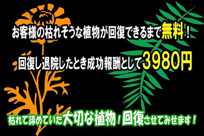 植物専門クリニック お客様の枯れそうな植物が回復できるまで無料! 回復し退院したとき成功報酬として3980円 枯れて諦めていた大切な植物!回復させてみせます