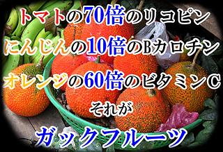 ガックフルーツ苗木