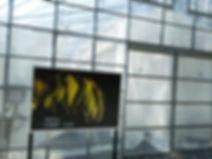 ※2017年 カレーリーフ専用の温泉ハウスが完成 総工費1000万円を投じて年中安定して出荷できる体制を整えました