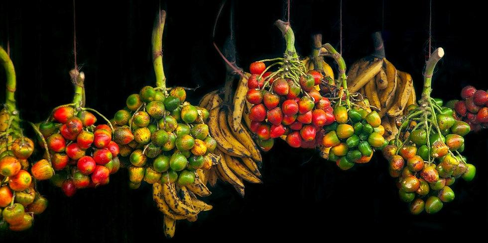 バナナの育て方マニュアル、バナナ栽培マニュアル