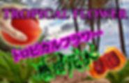 熱帯花木の販売