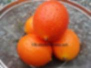 飛騨産のガックフルーツ(ナンバンカラスウリ・南蛮烏瓜)果実 ※果実の販売は種子も含まれるために法人様限定販売です。個人様への販売は不可になります。 ※種子の売買は禁止されているためにお手数ですが種子のみ弊社へ返送していただきます。 ※収穫でき次第の発送になります。 詳しい専用ページも作成しています。 果実1個 2300円 果実2個 4400円 完売