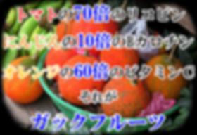 ガックフルーツ(ナンバンカラスウリ・南蛮烏瓜)苗木販売 Momordica cochinchinensis 中国、ベトナムなどに生えるツル性の多年草植物。別名ナンバンキカラスウリ、モクベツシ(木鼈子)、ガックフルーツとも呼ばれる。雌雄異株なので、両株の花が同時に咲かないと結実しません。βカロティン(ニンジンの10倍)・ リコピン(トマトの約70倍) 天然ビタミンE(アルファトコフェロール) ビタミンA  ビタミンC(オレンジの60倍)  ゼアキサンチン(トウモロコシの40倍)※ガックフルーツ
