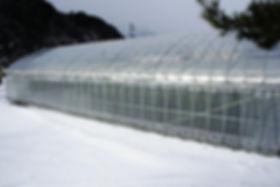 奥飛騨ファームのバナナ栽培温泉ハウス