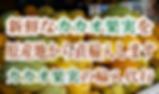 カカオ果実苗木の販売