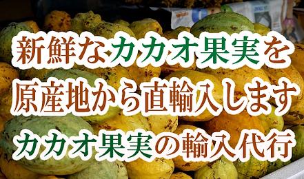 日本初の温泉の湯気を利用しての奥飛騨カカオ苗・カカオ種の販売専門店。カカオを種から栽培しています。温泉を利用することにより熱帯雨林の気候になり雪国でも奥飛騨カカオ苗などを栽培を可能にしました。カカオ栽培の魅力は驚きの生長と大きな葉が南国気分を味わいさせてくれます。ここでしか温泉カカオ苗木を購入することはできません。奥飛騨ファームでは日本初の温泉湯気を利用してのカカオ苗カカオ種の販売。種からのカカオ苗栽培をおこなっております。レッドカカオ苗・イエローカカオ苗・カカオ苗販売は奥飛騨カカオ栽培