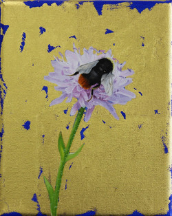 Red Tailed Bumblebee & Small Scabious