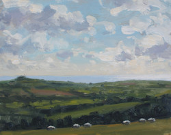 Sheep grazing on a breezy day