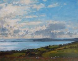 Sheep overlooking Weymouth