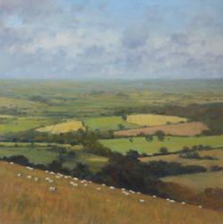 Sheep Grazing in Dorset Fields 103