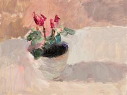 Cyclamen in a White Bowl