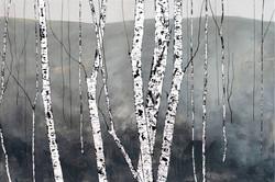 Birch - Silent Days