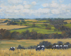 Cows on Poundbury Hillfort
