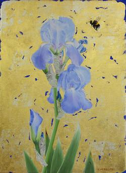 Blue Bearded Iris & Bumblebee