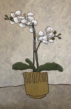 Ochre Orchid