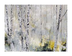 Birch - Ashdown Forest