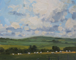 Sheep grazing near Maiden Castle,