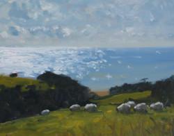 Sheep Grazing near Abbotsbury